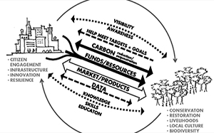 forests cities carbon